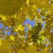 142x142px-avatar-bright-yellow-petals.jpg