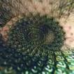 142x142px-avatar-flower-spiral.jpg