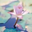 142x142px-avatar-lily.jpg