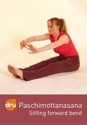 dru yoga  paschimottanasana the sitting forward bend