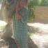 Sarawasti's picture