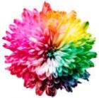 142x142px-avatar-bright-flower.jpg
