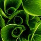 142x142px-avatar-hosta.jpg